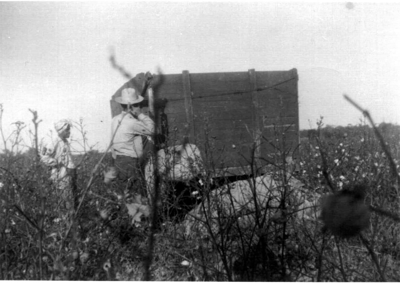 LB weighing cotton